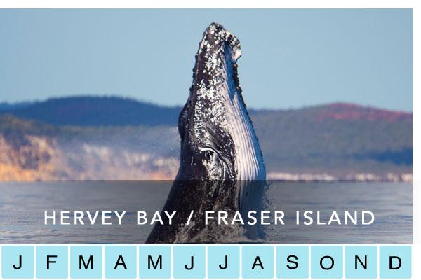 HERVEY BAY / FRASER ISLAND