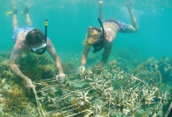 conservation diving