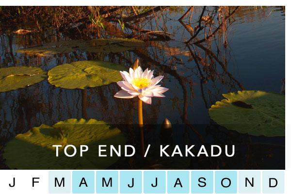 TOP END KAKADU / ARNHL'D