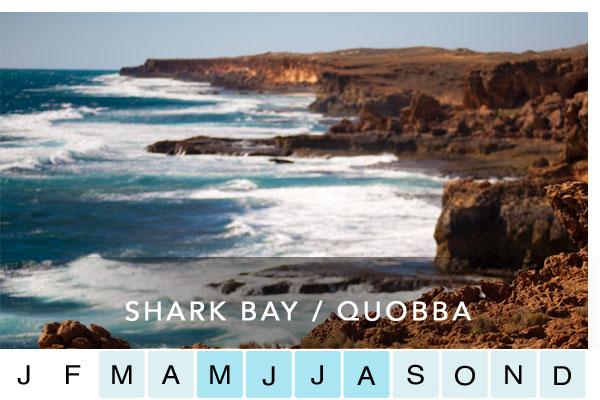 SHARK BAY / QUOBBA