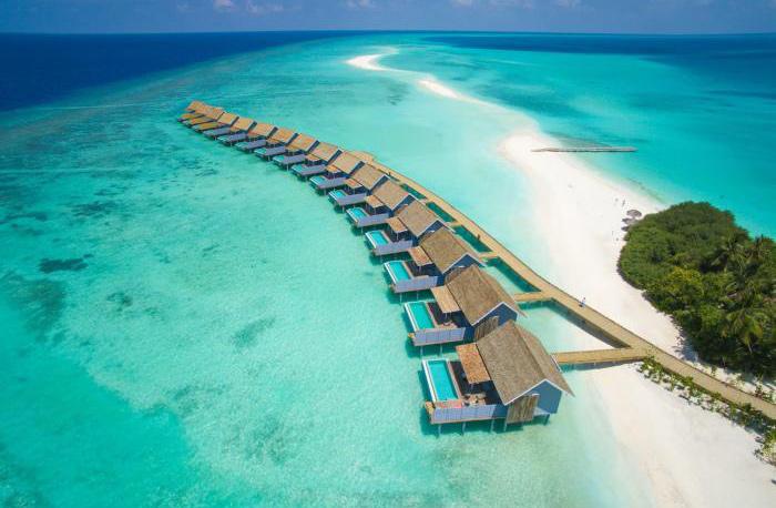 maldives diving